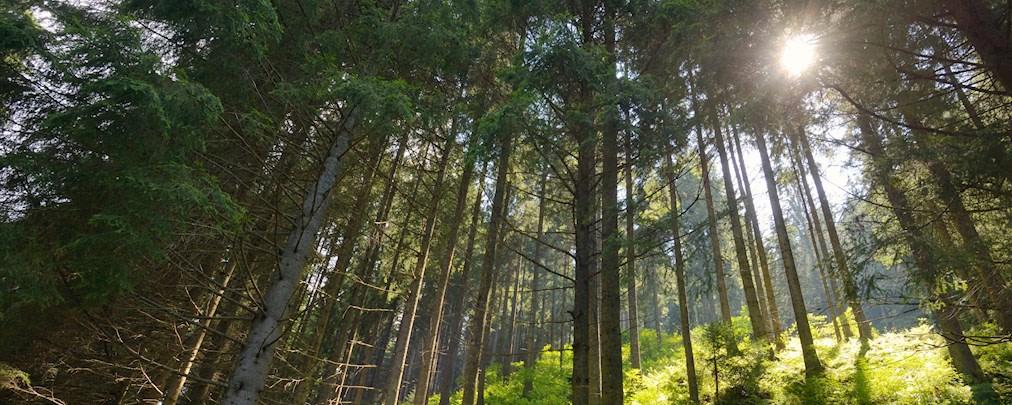 Schöffel Stiftung unterstützt Pflanzung von 30.000 Bäumen