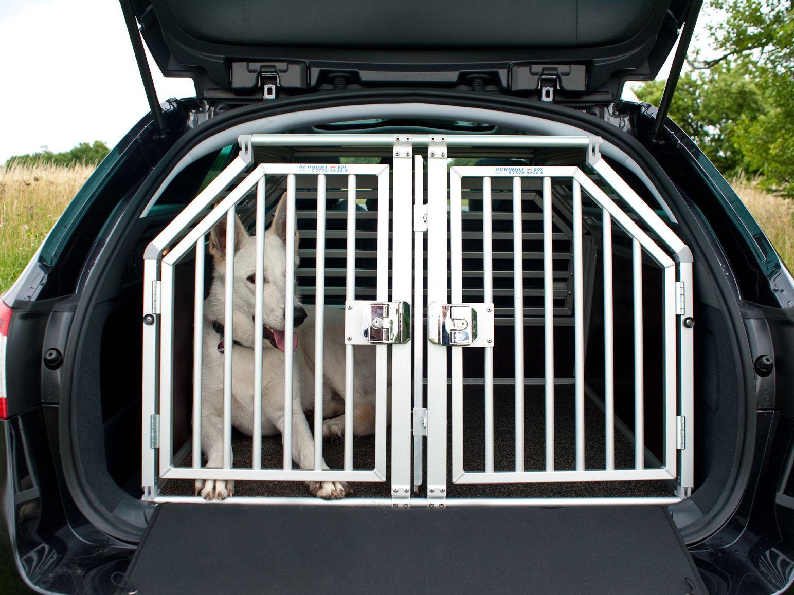 Hund in Transportbox