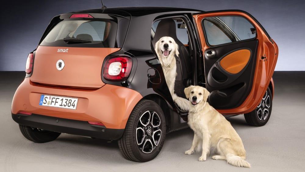 Hunde und Auto
